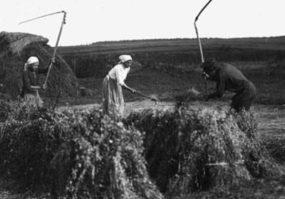 При Императоре Николае Втором Россия – крупнейший в мире экспортер зерновых культур